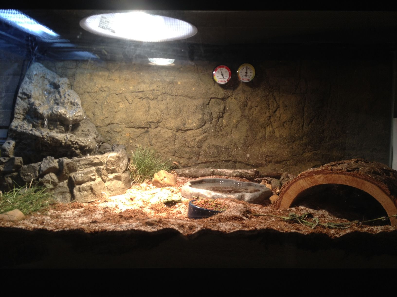 Tortoise Enclosure Ideas