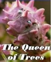 Nữ Hoàng Các Loài Cây